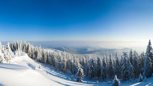 Сосновый лес покрытый снегом