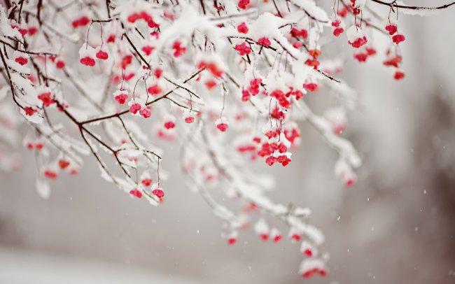 Красные маленькие цветки на ветке дерева в снегу