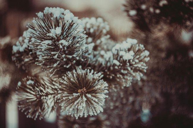 Пушистый снег на иголках ели