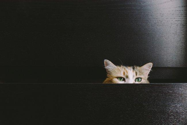 Кошка выглядывает из шкафчика