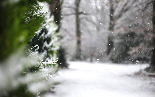 Падающий снег в зимнем лесу