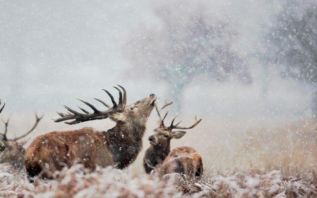 Олениха и олененок под падающим снегом