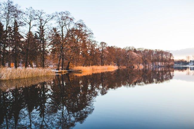 Отражение деревьев в зеркальном озере