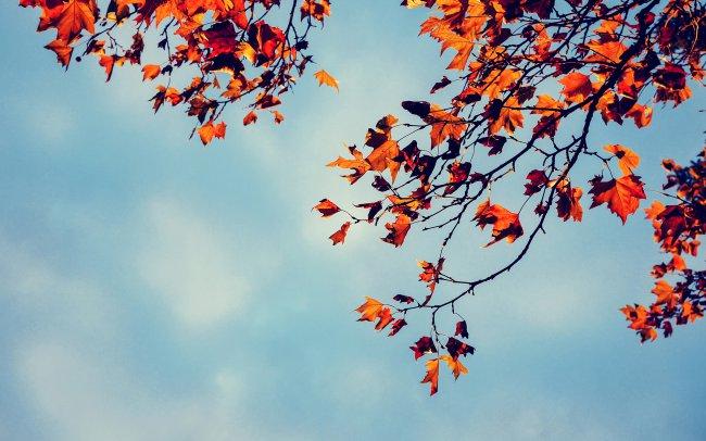 Желтые листья на ветках дерева