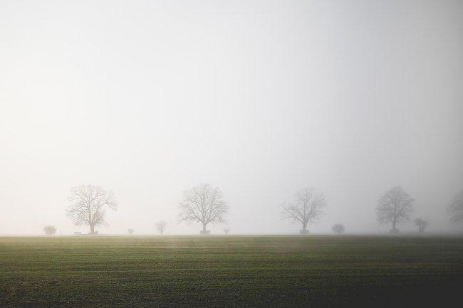 Туманное поле