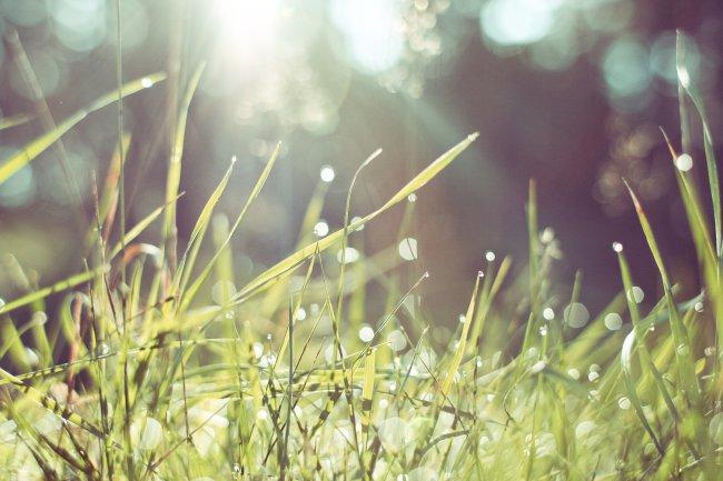 Трава в утреннем лесу