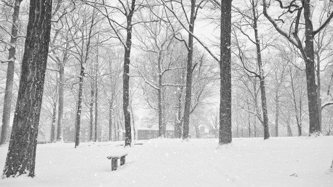 Падающий снег в парке