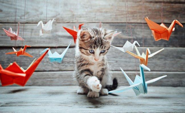 Котенок и бумажные журавлики