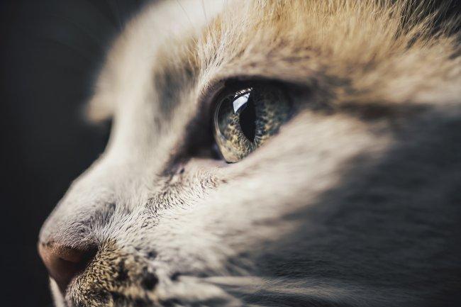 Фотография кошки от Фелисити Берклиф