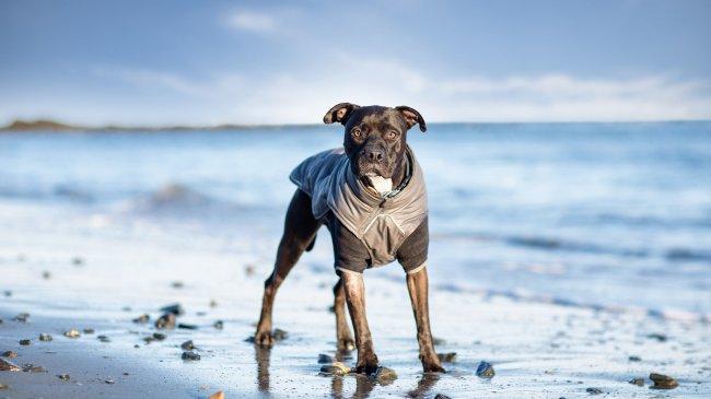 Собака у моря