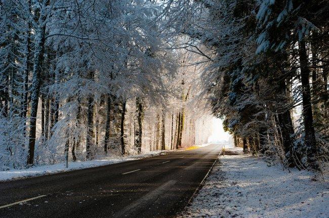 Дорога, ведущая сквозь снежный лес