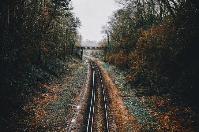 Железная дорога вдоль густого леса