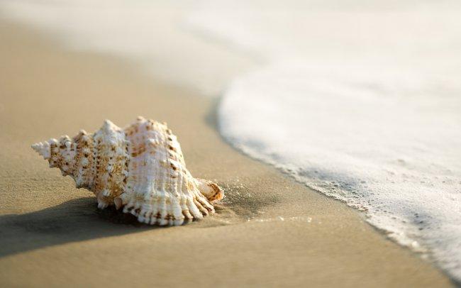 Ракушка на берегу