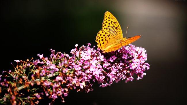 Бабочка в саду на цветущем растении