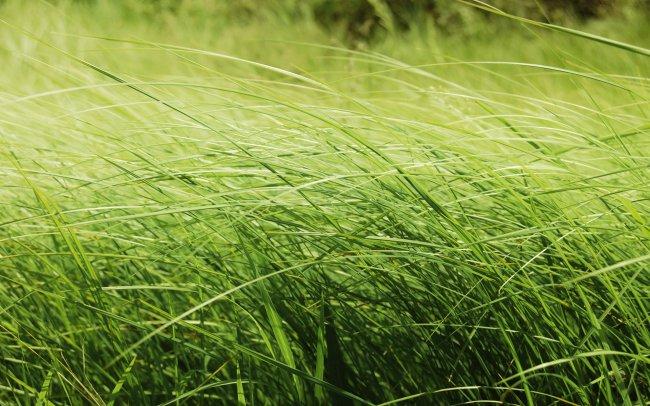 Зеленая полевая трава