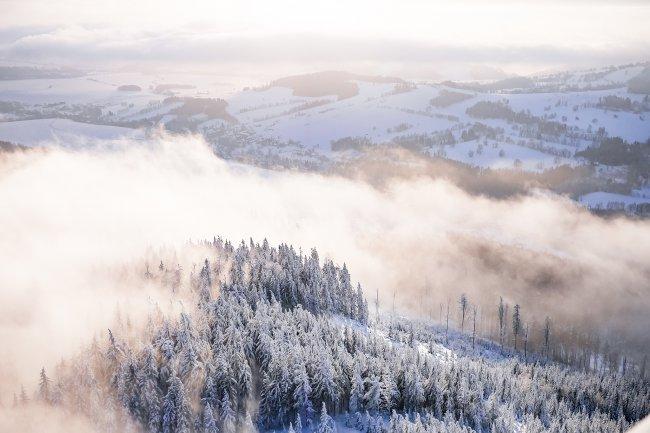 Туман в снежном лесу
