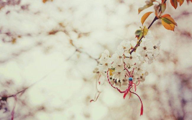 Узелок на ветке вишни