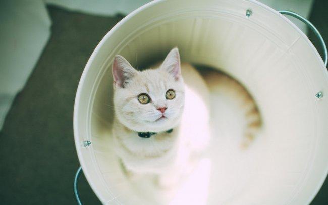 Котенок в ошейнике сидит в белом ведерке