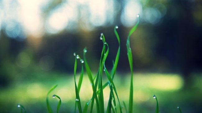 Зеленая трава с капельками воды