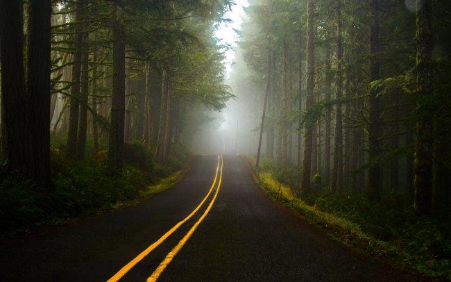 Дорога сквозь туманный лес