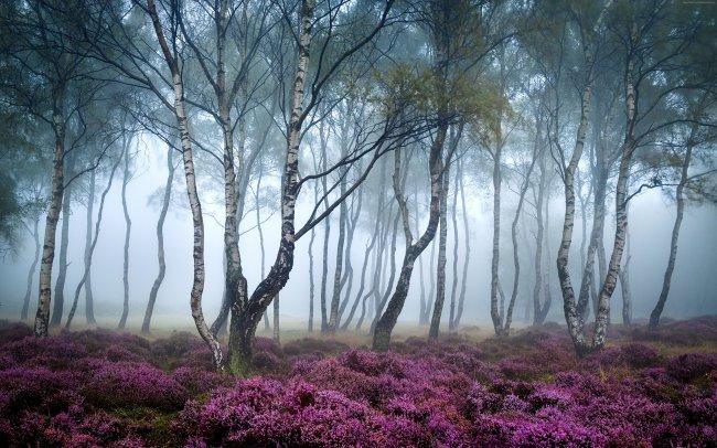 Деревья в туманном лесу