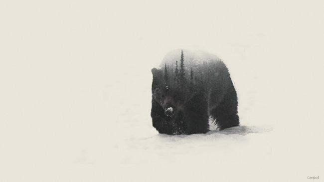 Медведь идущий по снегу