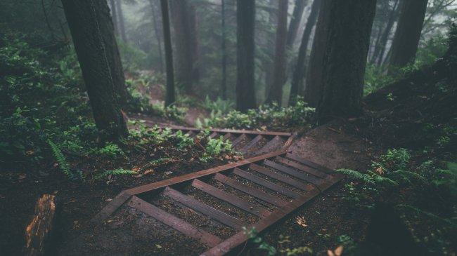 Лестница в густом лесу на склоне холма