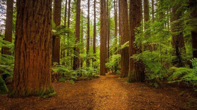 Папоротники у подножия больших деревьев в лесу