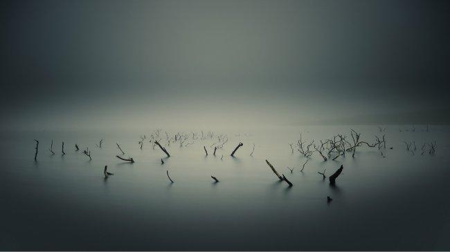 Торчащие из воды полусгнившие стволы деревьев