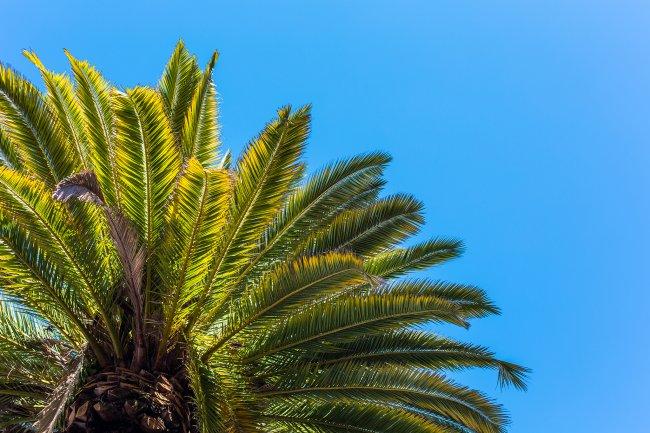 Пальмы на фоне ясного неба