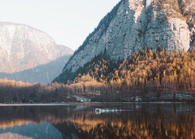 Лебединый взлет на рассвете, Австрия