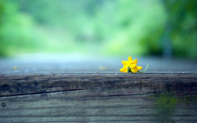 Желтый цветок лежащие на деревянном бруске