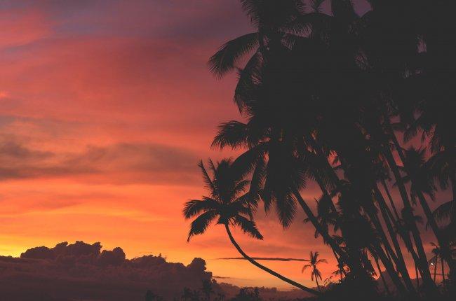 Пальмы на фоне заката