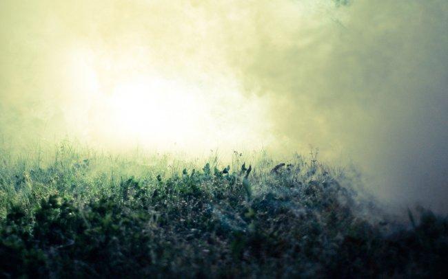 Трава в тумане