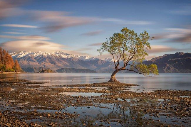 Дерево у озера Уанака в Куинстауне, Новая Зеландия