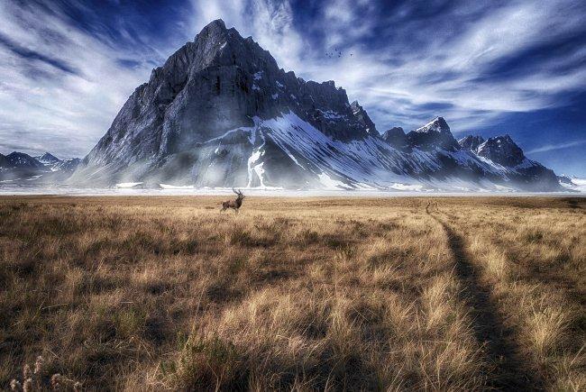 Олень на берегу реки на фоне горы