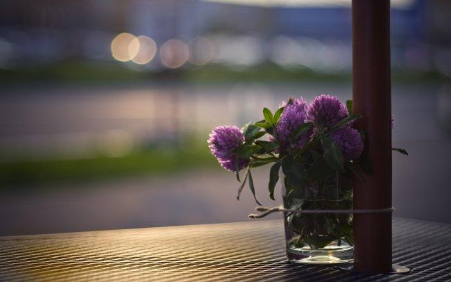 Букет цветов клевера в стакане на столе