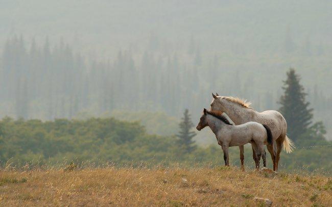 Пара красивых лошадей
