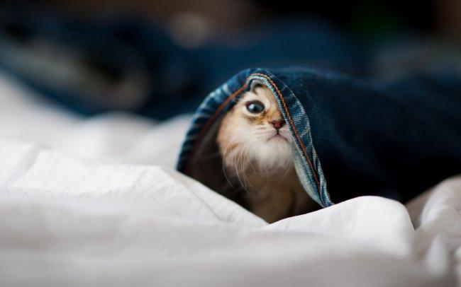 Котёнок залез в штаны