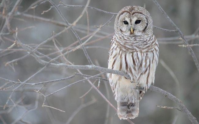 Белая полярная сова сидит на ветке дерева