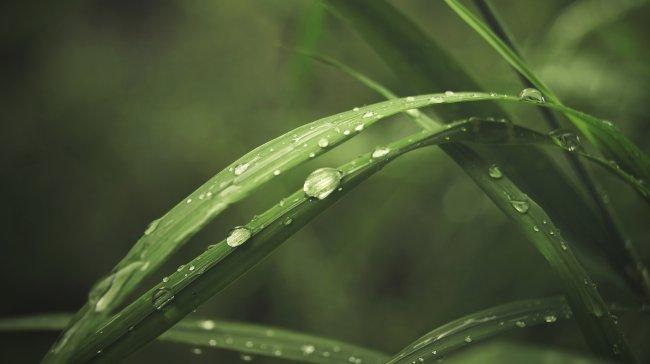 Капли воды на стеблях зеленой травы