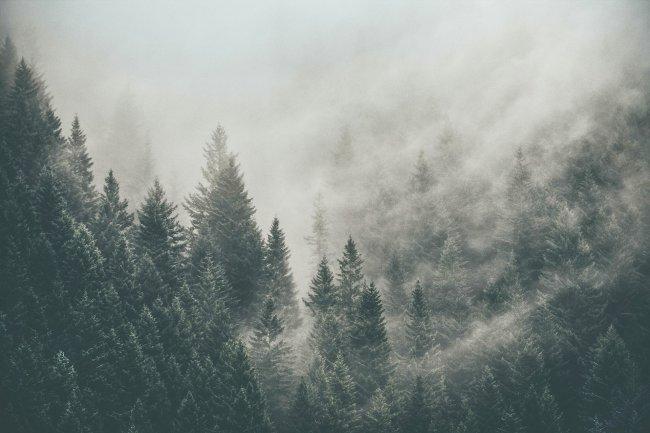 Таёжный лес в тумане