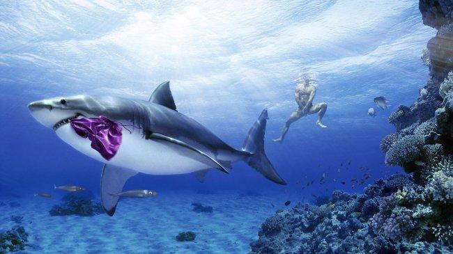 Акула уплыла с мужскими шортами в зубах
