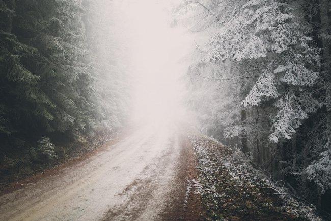 Утренняя дорога в хвойном лесу ранней зимой