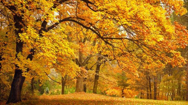 Деревья с пожелтевшими листьями в лесу
