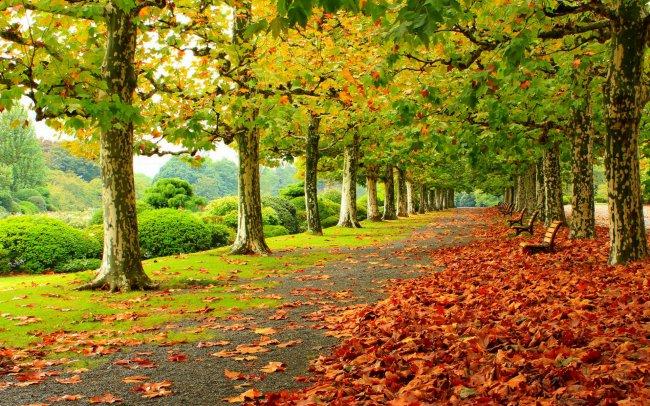 Осенняя листва в парке