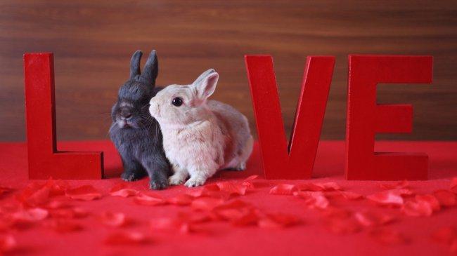 Два кролика - серый и белый на красном фоне