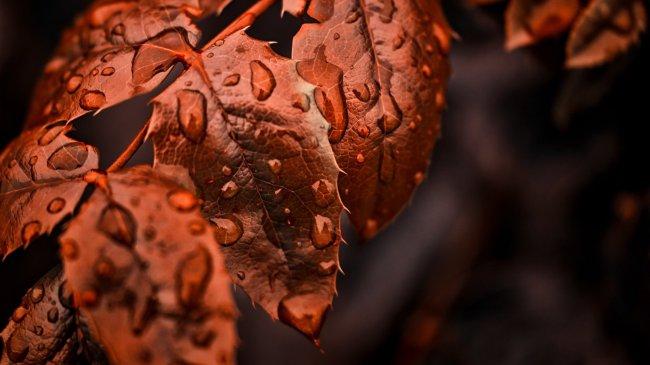 Капли дождя на осенней листве