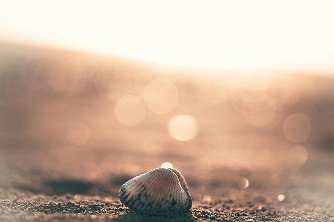 Ракушка на песке