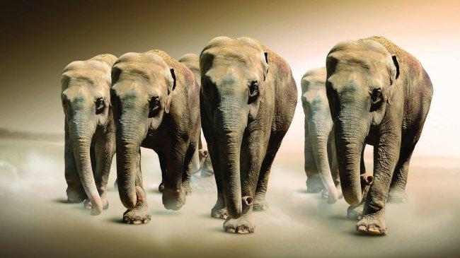 Семейство слонов путешествует по Саванне